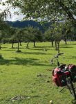Streuobstwiesen sind rar geworden in Österreich. Im Ybbstal gibt's noch einige.