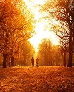 Bunte Blätter und bis zu 26 Grad – dieses Wochenende wird wahrscheinlich das letzte mit spätsommerlichem Wetter sein, bevor es dann langsam abkühlt.