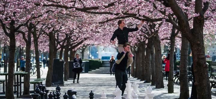 Spaziergänger bewundern die Kirschblüte im Kungstradgarden in Stockholm. Bisher mussten sich die Schweden kaum einschränken, Parks, Schulen und Geschäfte sind geöffnet. Das könnte sich bald ändern.