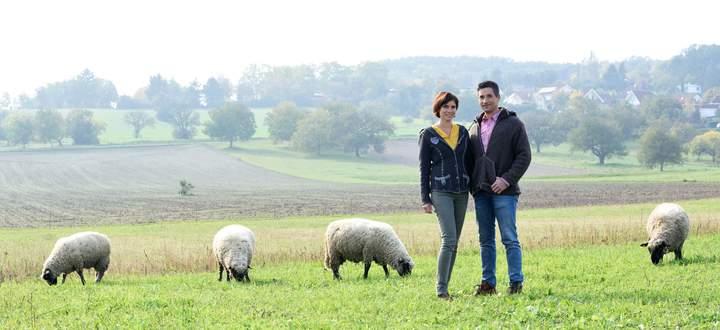 Julia und Johannes Steiger lassen ihre Schafe weiden – sie dienen auch in Weingärten oder zwischen Christbäumen als Rasenmäher.
