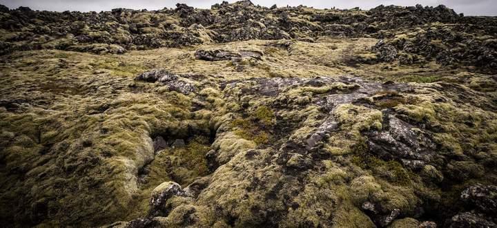 Moos und Lava auf Island