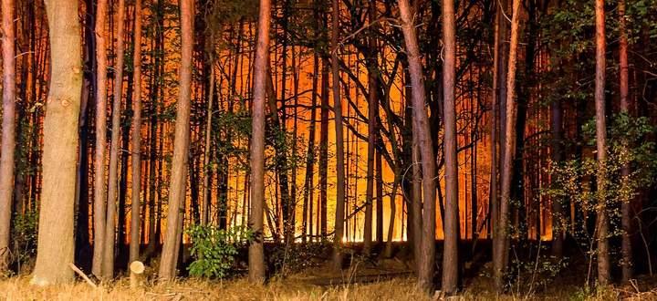 In einem Naturschutzgebiet in Brandenburg wurde Jonathan Franzen im August 2018 Augenzeuge eines Waldbrandes.