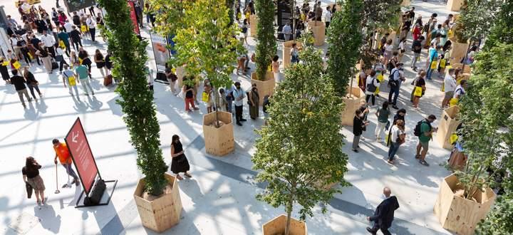 """200 Bäume werden als Teil von """"Forestami"""" später in der Stadt eingesetzt."""