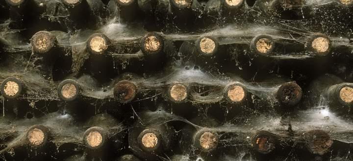 Lange Lagerfähigkeit ist ein Qualitätsmerkmal. Wer international reüssieren will, muss Weine mit großem Reifepotenzial herstellen.