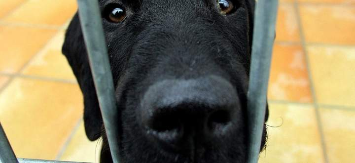 Langweilen sich Tiere – im negativen Sinn – auch, vielleicht sogar chronisch?