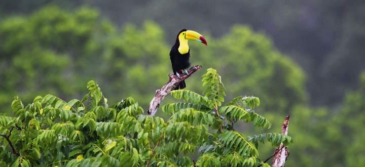Artenvielfalt. Rund zwei Drittel aller Tier- und Pflanzenarten leben in den Tropenwäldern