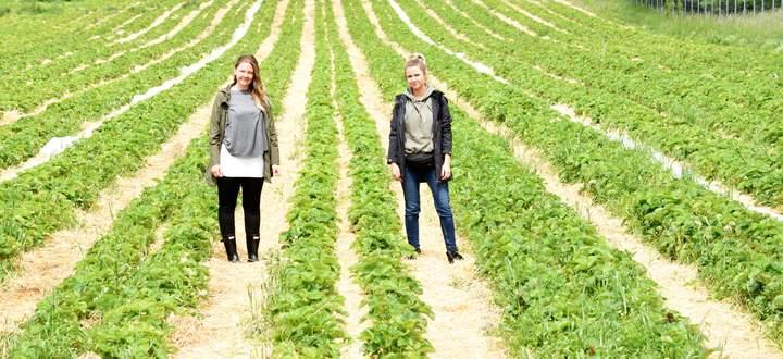 Die Radl-Töchter Gerlinde (links) und Gudrun in einem der Erdbeerfelder in Wien Donaustadt. Die Chefs, Manfred und Birgit Radl, haben für ein Foto keine Zeit: zu viel zu tun kurz vor dem großen Erntestart. Und wenn es brennt, muss sowieso die ganze Familie her.