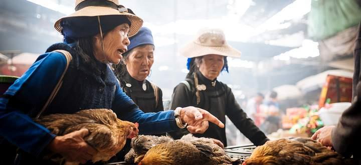 Markt in China: Nicht nur Hühner werden gehandelt, sondern auch Wildtiere wie Zibetkatzen und Schuppentiere.