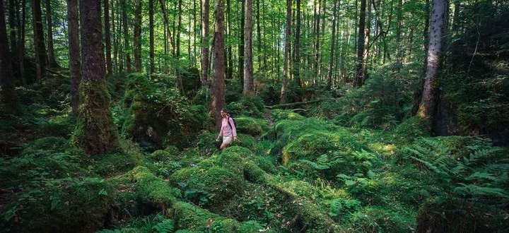 Wald. Hinaus in die Natur lautet die Urlaubsdevise, vor allem in diesem Coronajahr.