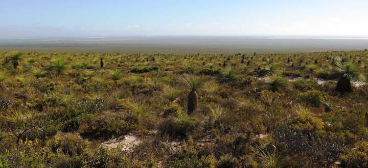 Obwohl die Böden des Swan Coastal Plain extrem nährstoffarm sind, gehören sie zu den artenreichsten der Welt.
