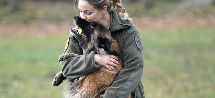 Die Hunde des Heeres leben ähnlich wie Familienhunde bei ihren zugeteilten Soldaten zu Hause.