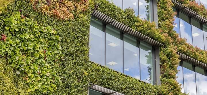 Seit Anfang April 2021 gibt es eine Norm für Fassadenbegrünungen.