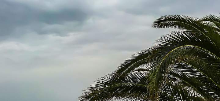 Sky and palm. lanzarote. canary islands