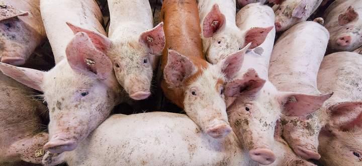Treffen zur Lage am Fleischmarkt und Haltung von Nutztieren
