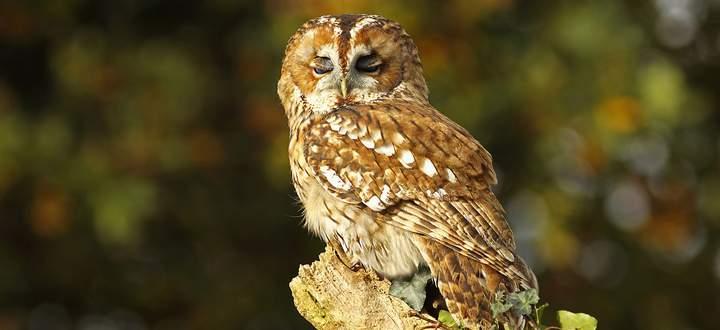 Bei vielen Vogelarten - im Bild ein kleiner Waldkauz - ist der Bestand in den vergangenen Jahren drastisch zurückgegangen.