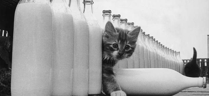 Milchglasflaschen (wie hier auf einem Archivbild aus 1964) können ab März in Automaten zurückgegeben werden.
