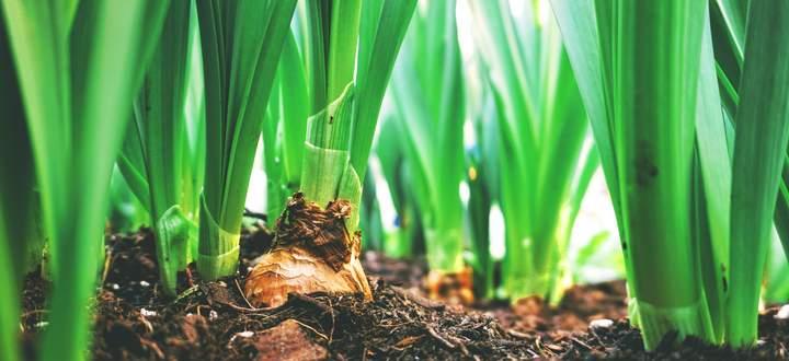 Manche Pflanzen vertragen sogar leichte Minusgrade.