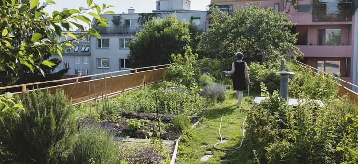 """Experimentell wohnen mit Dachgrün (im Bild das selbstverwaltete Projekt """"Sargfabrik"""")."""