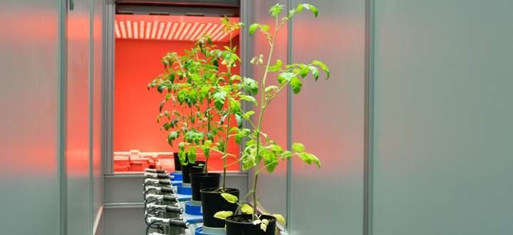 Die Pflanzen werden automatisiert am Fließband zu den verschiedenen Bildgebungsboxen befördert.