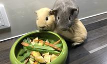 Haustiere brauchen auch in schwierigen Zeiten weiter Fressen und allen möglichen Zubehör. Damit lässt sich Geld verdienen.