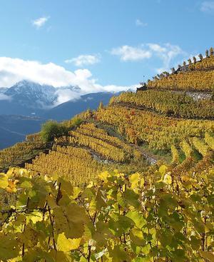 Der Herbst ist die ideale Zeit zum Weinwandern im Wallis.