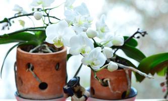 Blühende Orchideen auch im Winter.