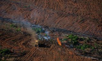 Deforestation and Fire Monitoring in the Amazon in July, 2020 Monitoramento de Desmatamento e Queimadas na Amazônia em Julho de 2020