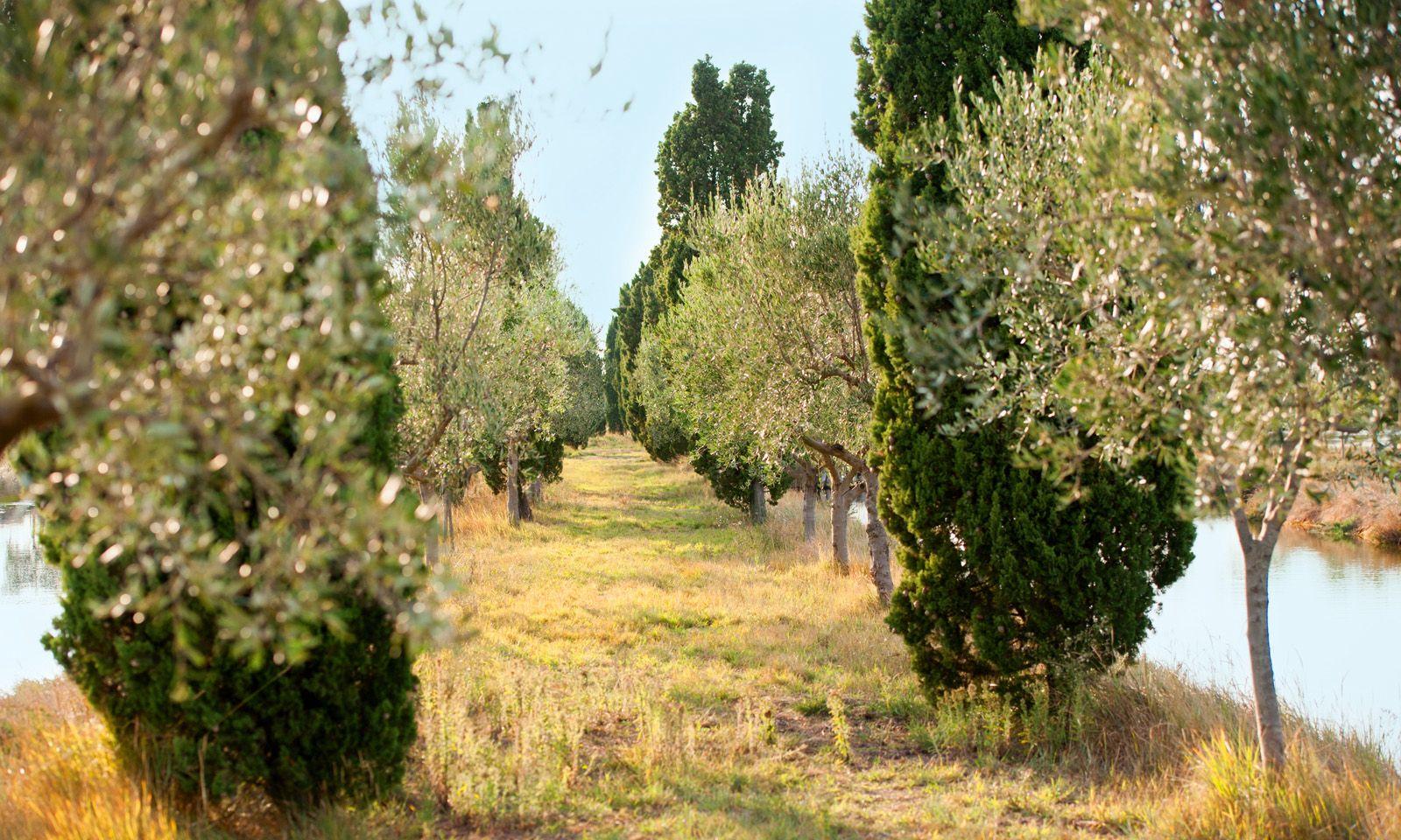 Nutzung. Olivenbäume säumen die Wälle, Wein und Früchte gedeihen auf der Insel.