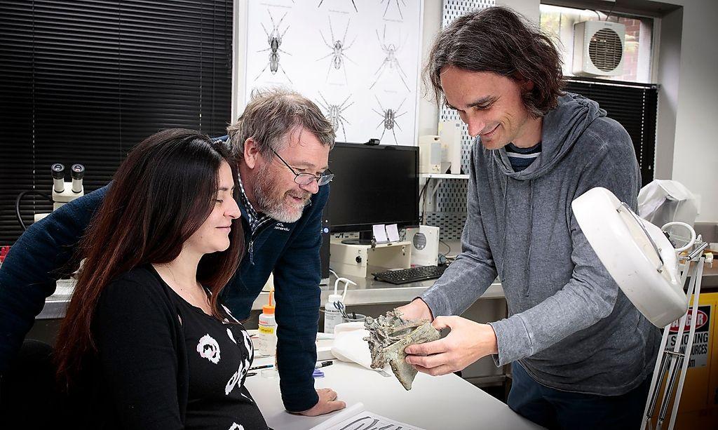 Vanesa De Pietri, Paul Scofield und Gerald Mayr (v.l.) forschen an den Fosslien des Riesenpinguins im Canterbury Museum in Christchurch.