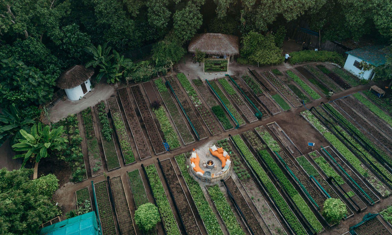 Gemüseanbau. Einige Pflanzen hat das Resort im Repertoire. Gut für die Küche.