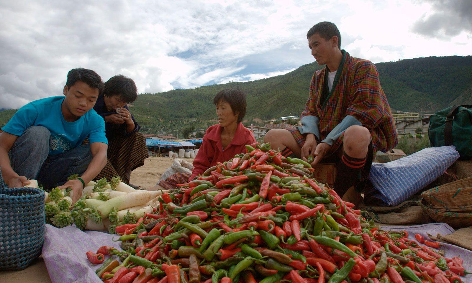 Chilis sind ein Hauptnahrungsmittel, trocken und frisch.