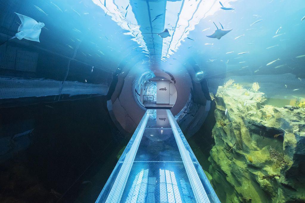 spaziergang unter wasser 39 39 atlanik tunnel 39 39 im haus des meeres. Black Bedroom Furniture Sets. Home Design Ideas