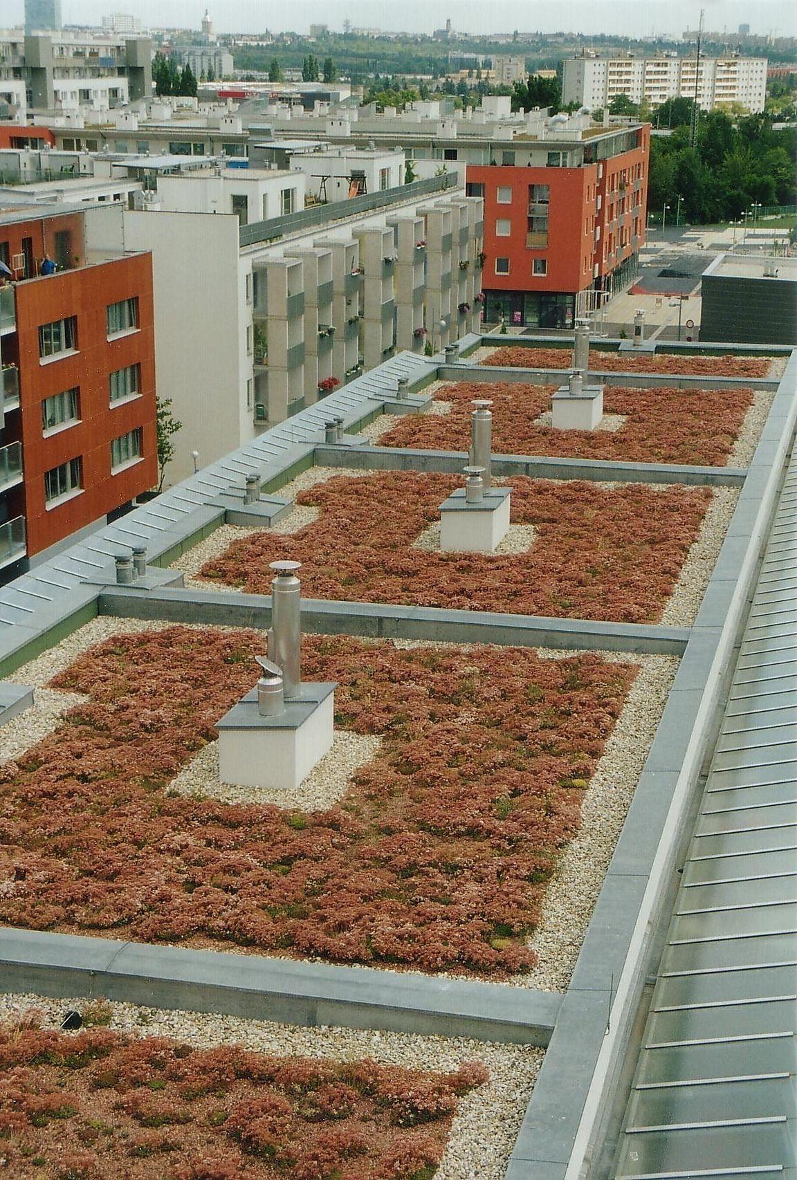 Dachbegrunung Graser Bienen Und Blumen Diepresse Com