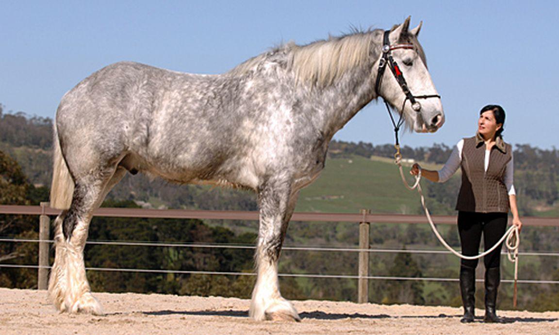 Cavallo partnersuche