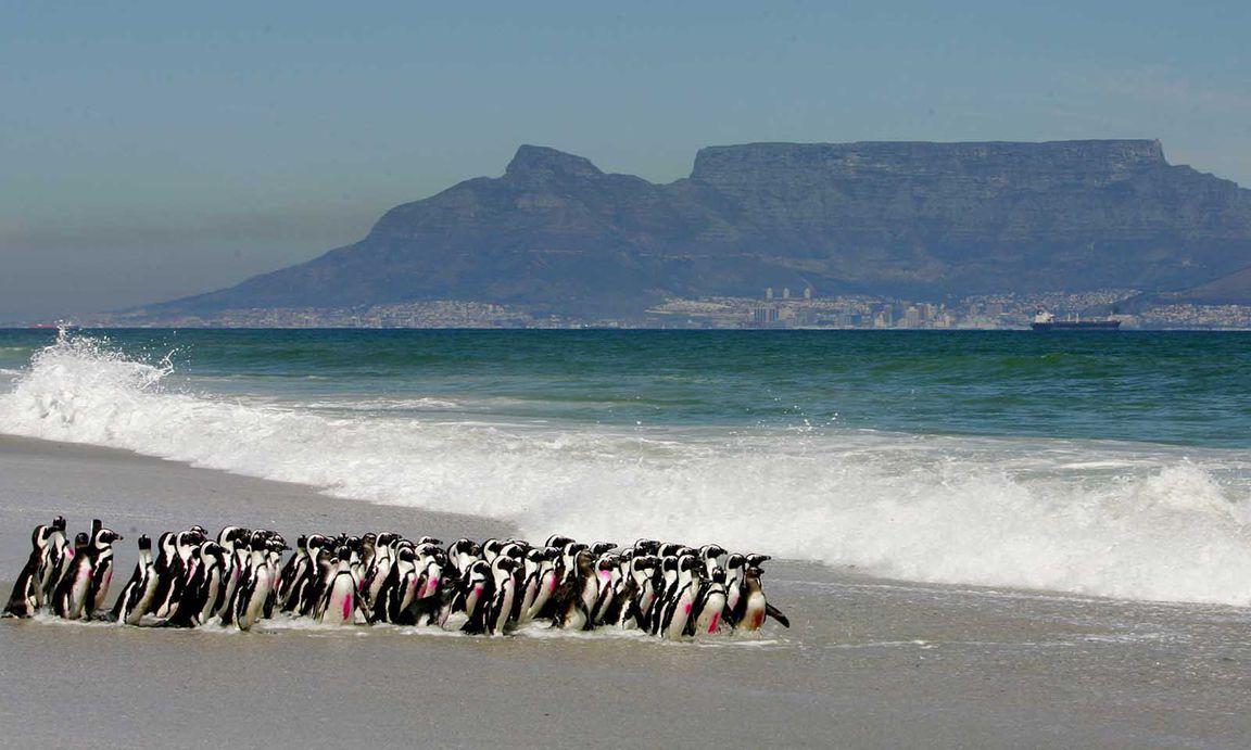 Partnersuche südafrika cape town
