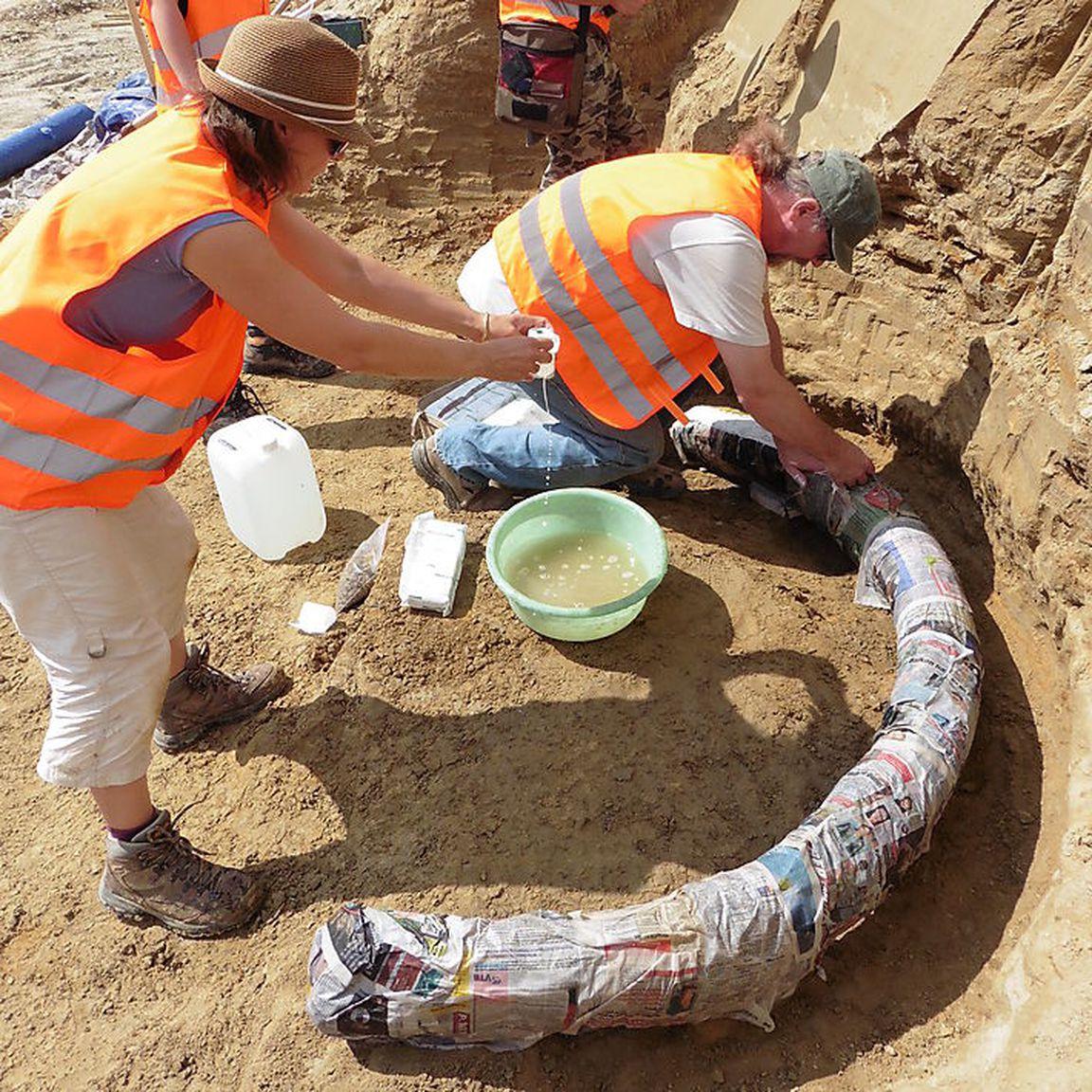 Fossil s delefant steppen oder wollhaarmammut for Welche poolfolie 0 6 oder 0 8