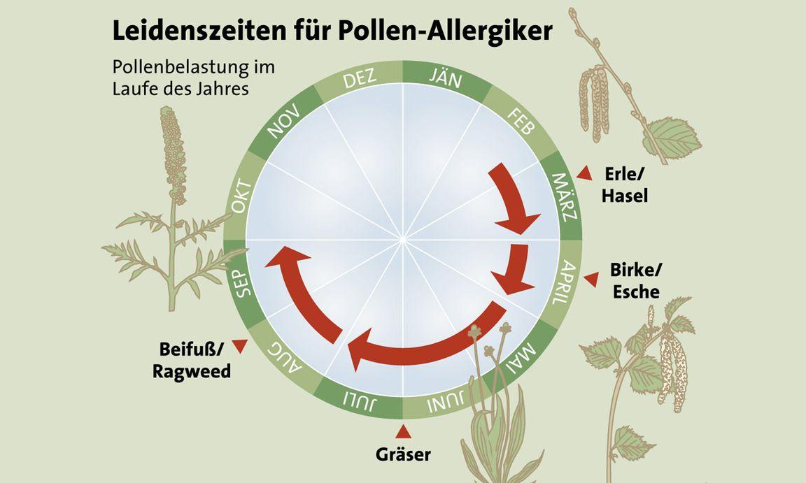 luftschadstoffe machen pollen aggressiver. Black Bedroom Furniture Sets. Home Design Ideas