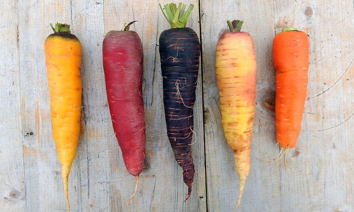 Karottenpartikel