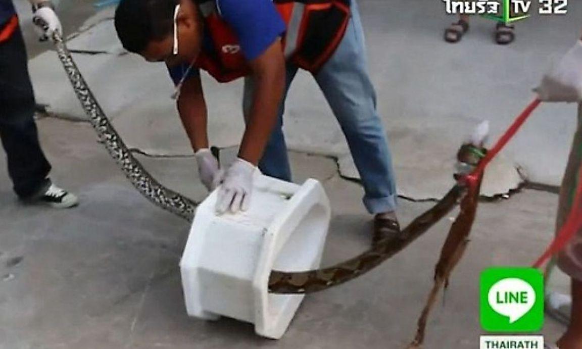 Python attackierte Mann auf der Toilette « DiePresse.com