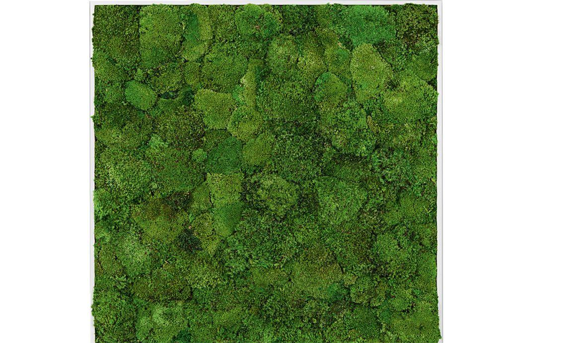 Zimmergarten blinzelnde w nde for Style green