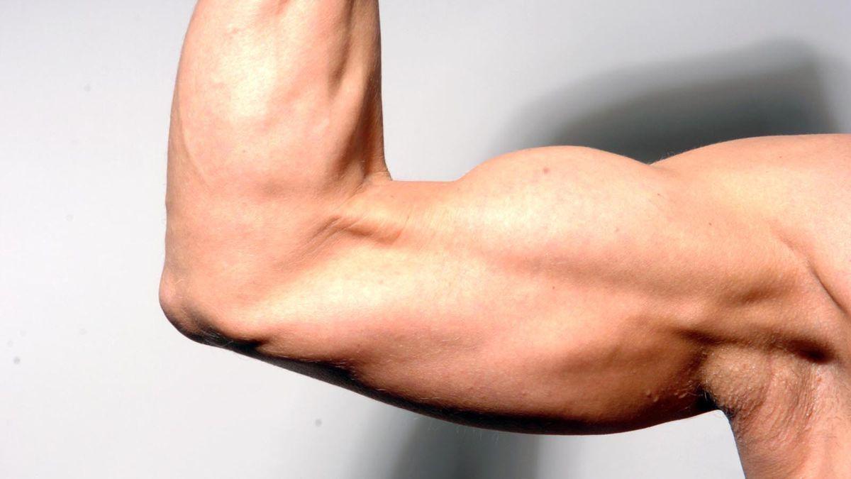 Der Muskel arbeitet mit vereinten Kräften « DiePresse.com