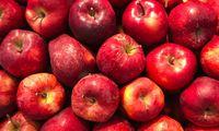 Ein Rezept für Äpfel im Schlafrock aus dem Jahr 1839.
