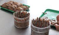 Konserve. Colatura ist ein Nebenprodukt von eingelegten Sardellen.