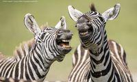 Was es da wohl zu lachen gibt? Oder zu staunen?