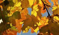 Herbstlaub beschert kostbaren Mulch.