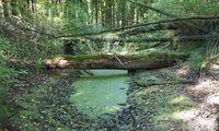 Gleich nach der Ankunftsstelle am Nordufer der Insel taucht man in einen Urwald ein, in dem drei Weiher nisten.