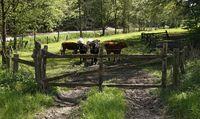 """""""Die letzte Kua macht 's Gatter zua"""", den Satz merken wir uns alle, wenn wir an einer Weide vorbeikommen."""