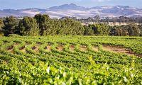 Terrain. Karges Gelände und guter Boden für Weinbau eng beieinander.