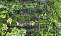 Bei Living Walls richtet man sich nach den gewünschten Pflanzen.