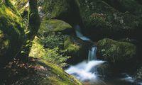 Wissen wir alle, tun wir aber zu selten: Regeneration suchen und finden durch aufmerksame Aufenthalte im Wald.